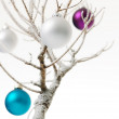 Christmas tree — Stock Photo #6117849