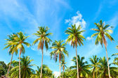 Tropical palms under blue sky — Stock Photo