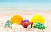 Sada mušlí na mořské pláži — Stock fotografie