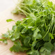 Fresh cilantro — Stock Photo