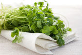 Fresh coriander — Stock Photo