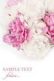 Beautiful peony flowers — Stock Photo