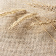 Wheat ears border on burlap background — Stock Photo