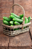 Harvest cucumbers in a basket — Stock Photo