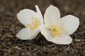 Thé aux fleurs de jasmin — Photo