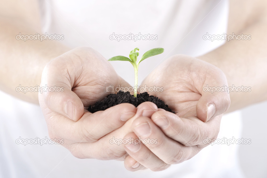Sprout in hands on white background  — Stock Photo #6043177