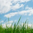 Green grass — Stock Photo #6094630