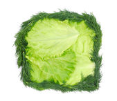 Lettuce with dill — Stock Photo