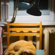 Cat under lamp — Stock Photo