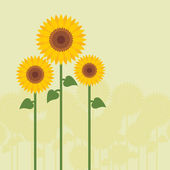 Yellow sunflowers vector — Stock Vector