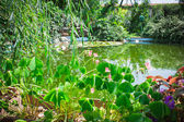 Water lilies lake garden — Stock Photo