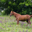Horse in field — Stockfoto