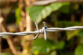 Macro Barbed Wire — Stock Photo