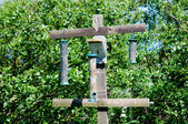 Wild Bird Feeder — Photo