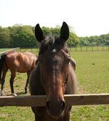 Horse closeup — Stock Photo
