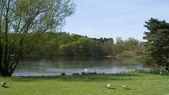 Lakeside View — Foto Stock