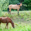Stock Photo: Horses on Bank