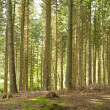 Trees in a forest — Stock Photo