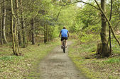Cyclist in the woods — Stock Photo