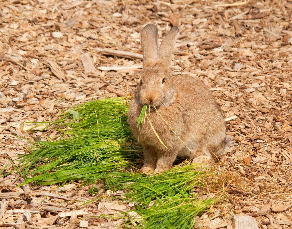 Как приготовить кролика чтобы мясо было мягким и сочным 1