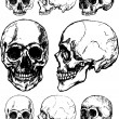 Royalty-Free Stock Vector Image: Skull illustration