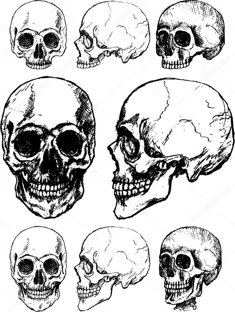 Skull illustration — Stock Vector © hugolacasse #6059461