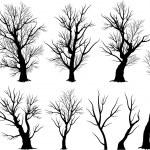 Creepy tree silhouettes — Stock Vector