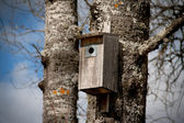 Nesting box on a tree — Stock Photo