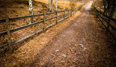 Gravel path to the forest — Stock Photo