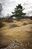 Одинокое дерево на поле — Стоковое фото