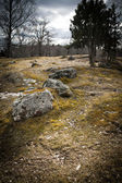Stones and tree on a field in Sweden — Fotografia Stock