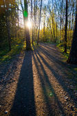 Beautiful shadows from trees in the woods — Stock Photo