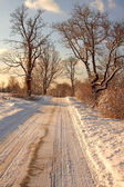 Snow covered park at early morning light. — Stock Photo