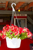 Hanging flower pot in front of seafood restaurant. — Stock Photo