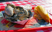 A plate of clams. — Stock Photo