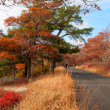 Beautiful fall colors by the country road. — Стоковая фотография