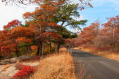 Beautiful fall colors by the country road. — Stock Photo