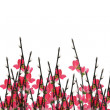 Chinese New Year plum blossom background — Stock Photo