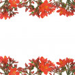Stock Photo: Red floral design border
