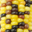 Colorful Indian corns background — Stock Photo