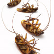 Dead cockroaches — Stock Photo