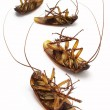 Stock Photo: Dead cockroaches