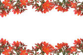 Red floral design border — Stock Photo