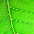 Close up image of green leaf - Stock Photo