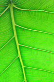 Close up image of green leaf — Stock Photo