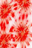 Red floral abstract background — Stock Photo