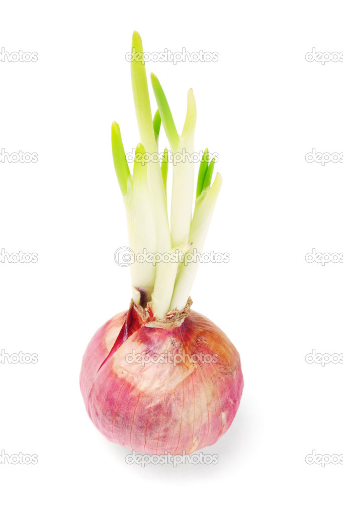 how to grow onions in florida