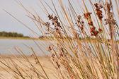 Colostrai's pond . Sardinia Italy — Stockfoto