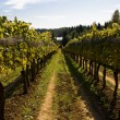 Vineyard on sunny day — Stock Photo #6074578
