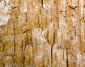 Old wood inside texture in brown orange hue — Stock Photo